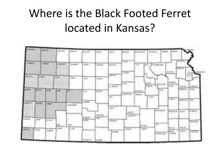 Where is the Black Footed Ferret located in Kansas?
