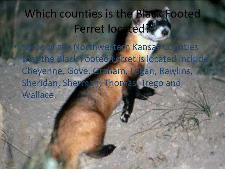 Which counties is the Black Footed Ferret located?