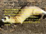 why was the black footed ferret put on the endangered species list