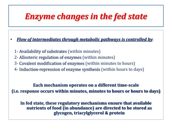 Enzyme changes in the fed state