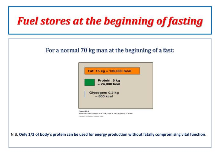 Fuel stores at the beginning of fasting