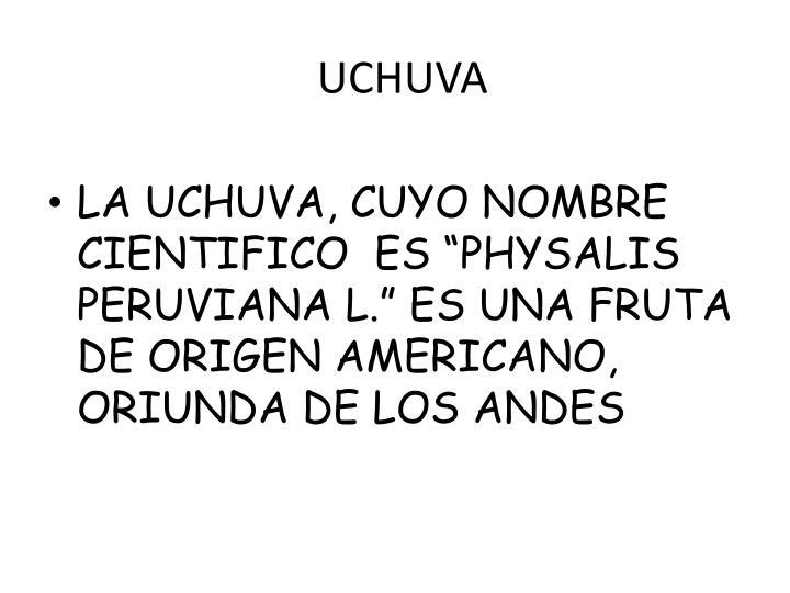 UCHUVA