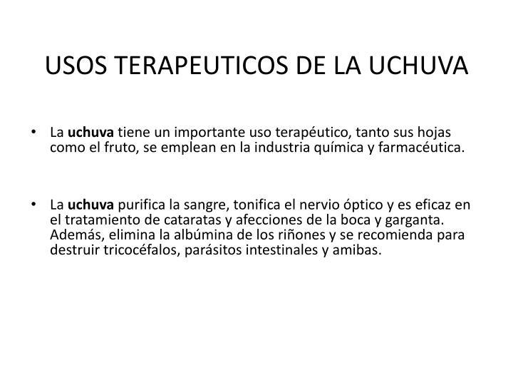 USOS TERAPEUTICOS DE LA UCHUVA