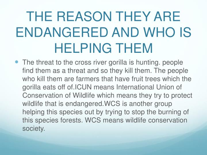The reason they are endangered and who is helping them