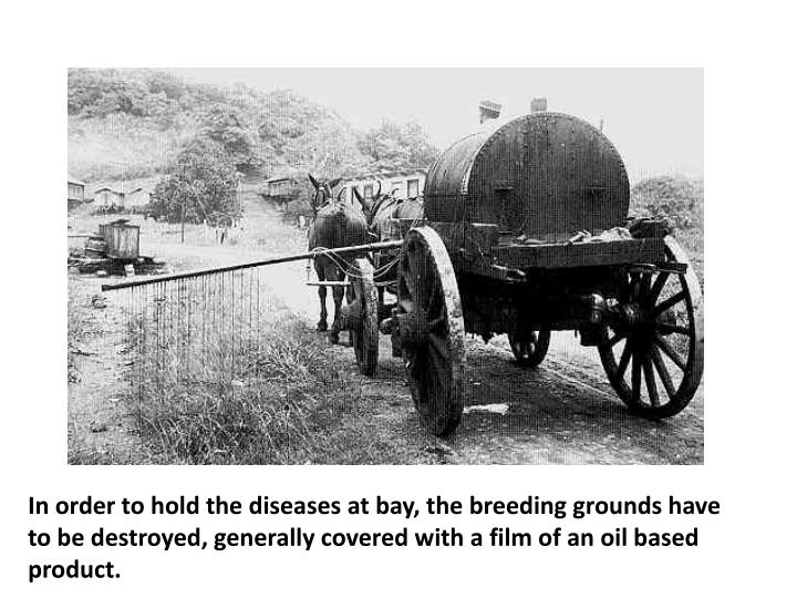 In order to hold the diseases at bay, the breeding grounds have to be destroyed, generally covered with a film of an oil based product.