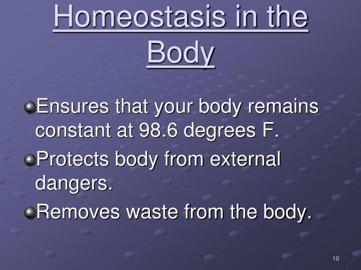 Homeostasis in the Body