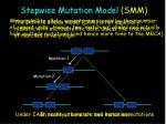 stepwise mutation model smm