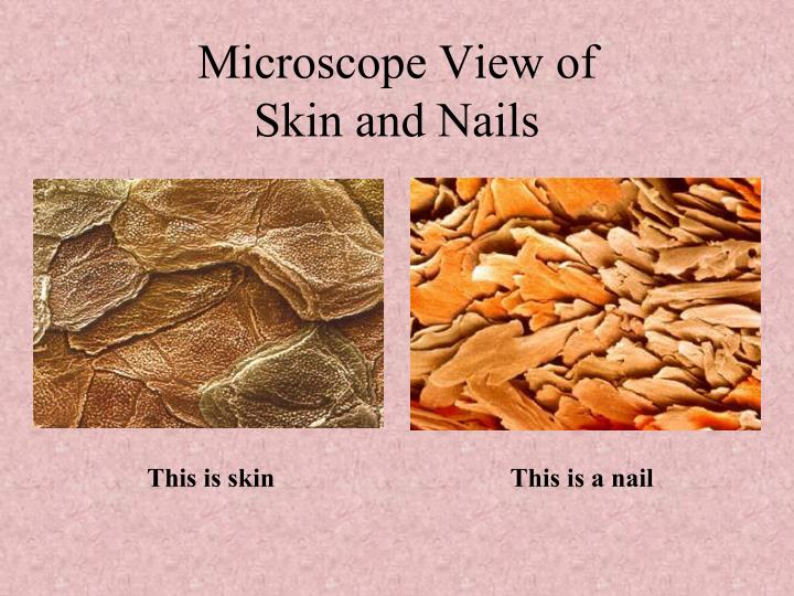 Microscope View of