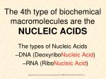 the 4th type of biochemical macromolecules are the nucleic acids