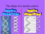 the shape of a nucleic acid is