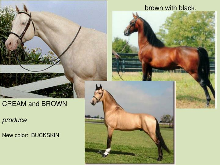 brown with black