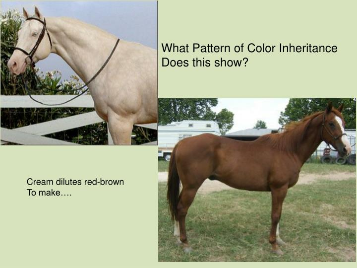 What Pattern of Color Inheritance