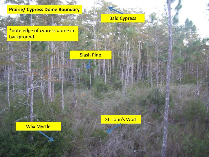Prairie/ Cypress Dome Boundary