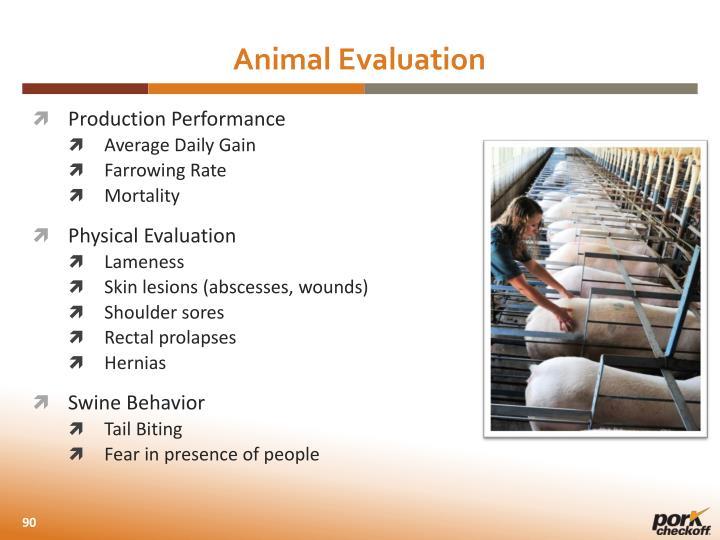 Animal Evaluation