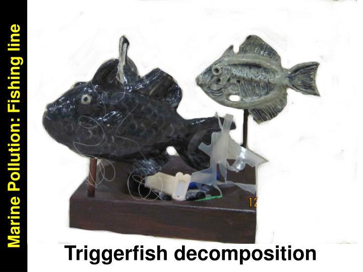 Marine Pollution: Fishing line