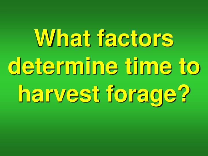 What factors determine time to harvest forage