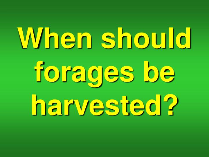 When should forages be harvested?