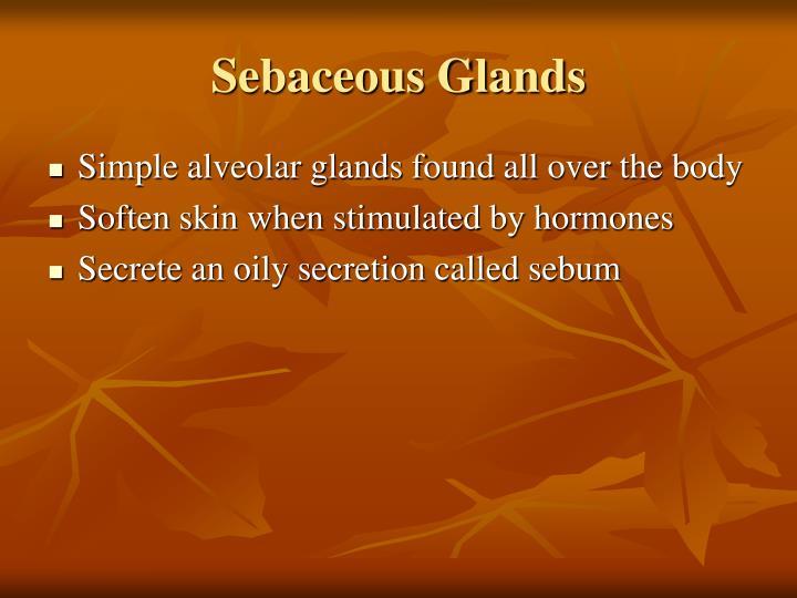 Sebaceous Glands