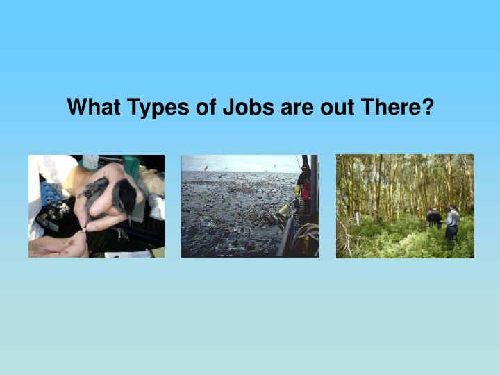 What Types of Jobs are out There?