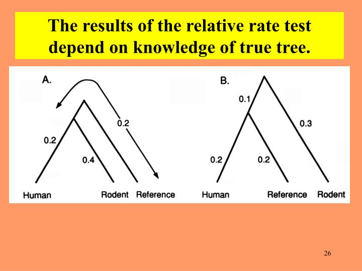 The results of the relative rate test depend on knowledge of true tree.