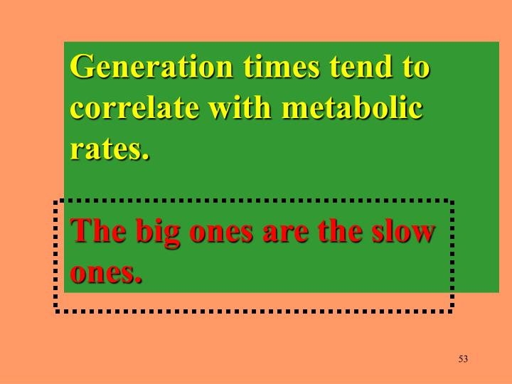 Generation times tend to correlate with metabolic rates.