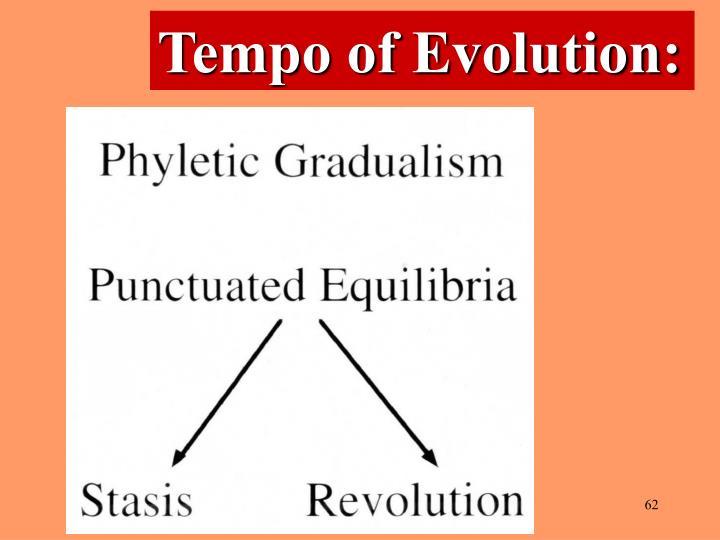 Tempo of Evolution: