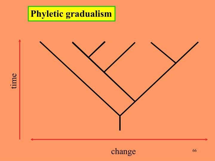 Phyletic gradualism