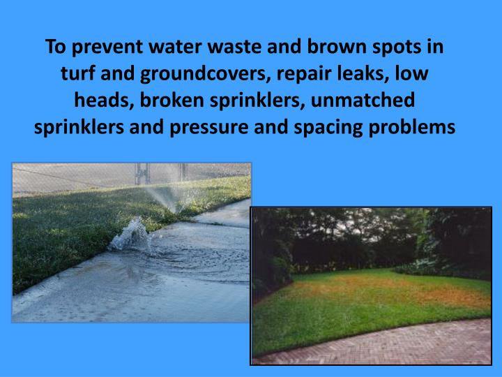 To prevent water waste and brown spots in turf and groundcovers, repair leaks, low heads, broken sprinklers, unmatched sprinklers and pressure and spacing problems
