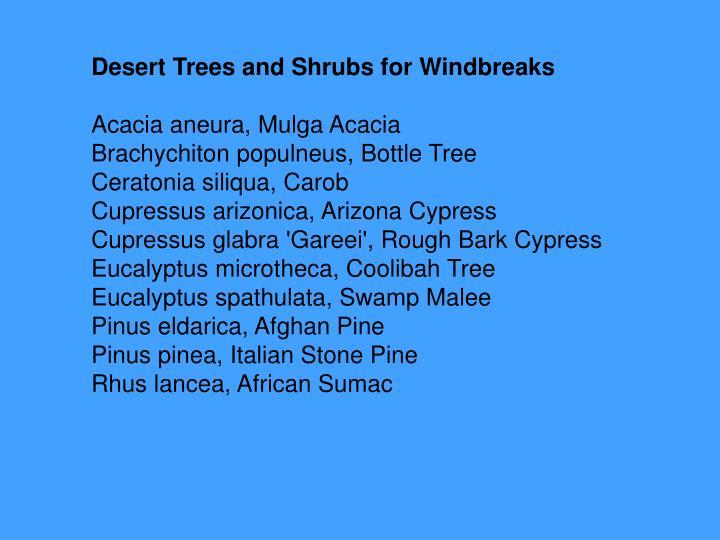 Desert Trees and Shrubs for Windbreaks
