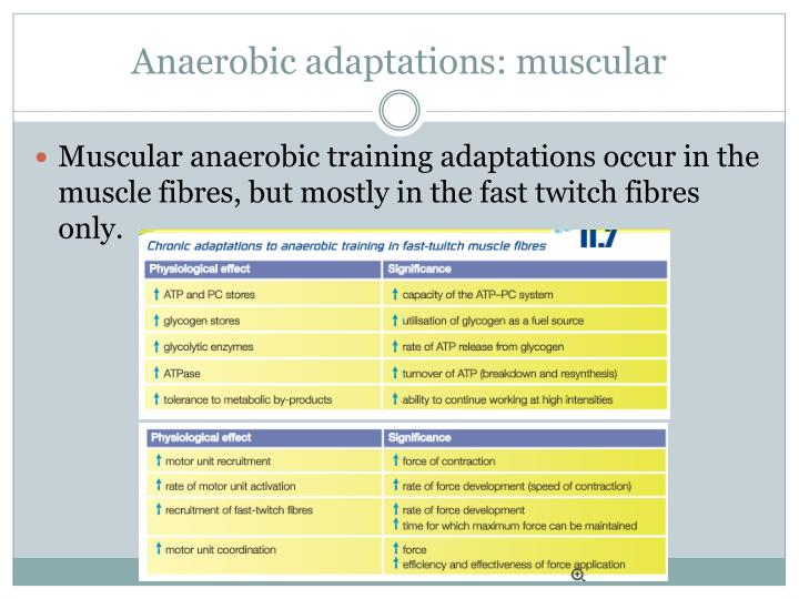 Anaerobic adaptations: muscular
