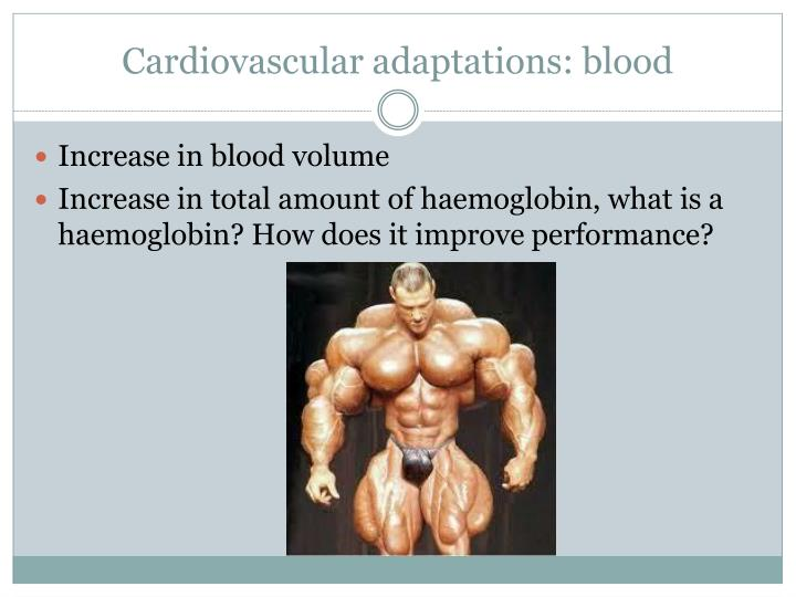 Cardiovascular adaptations: blood