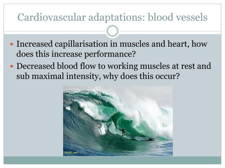 Cardiovascular adaptations: blood vessels