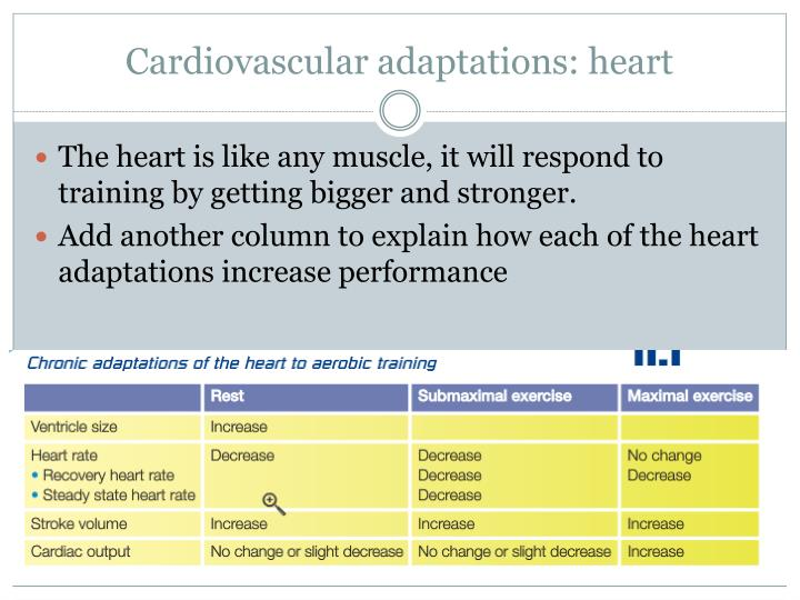 Cardiovascular adaptations: heart