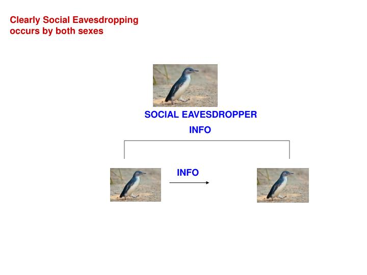 SOCIAL EAVESDROPPER