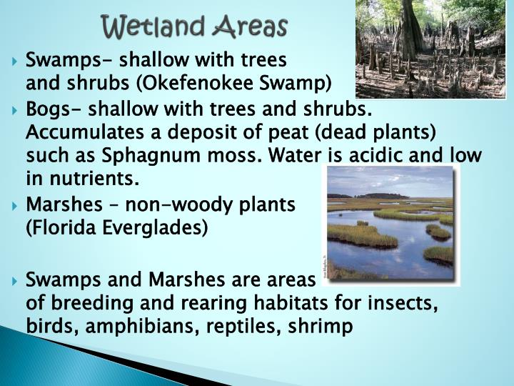 Wetland Areas