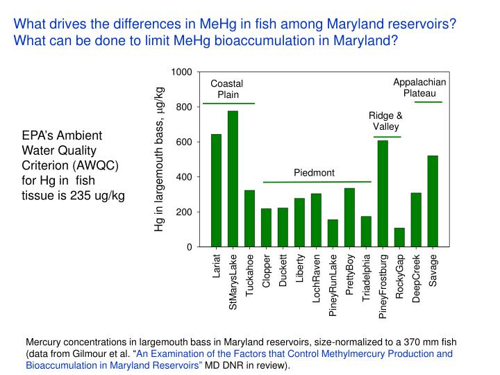 What drives the differences in MeHg in fish among Maryland reservoirs?
