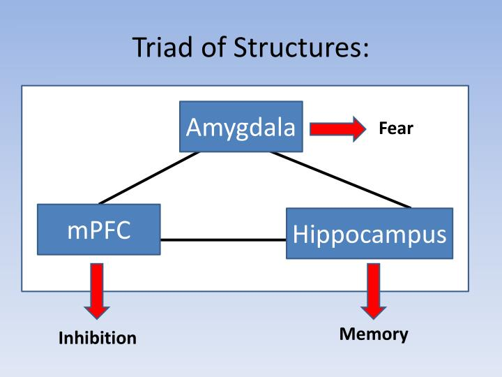 Triad of Structures: