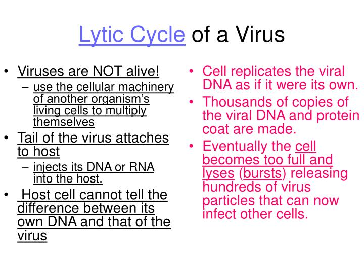 Viruses are NOT alive!
