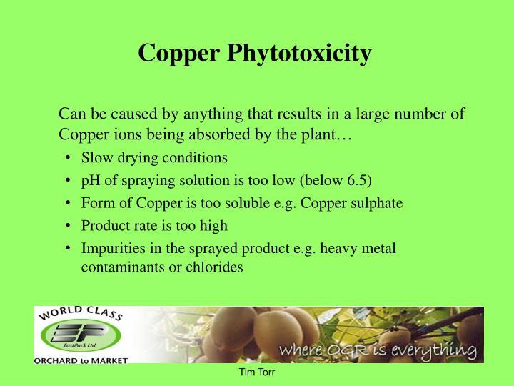 Copper Phytotoxicity