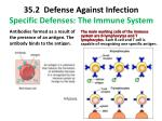 35 2 defense against infection specific defenses the immune system4