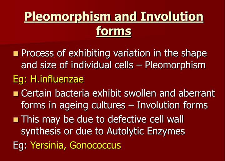 Pleomorphism and Involution forms