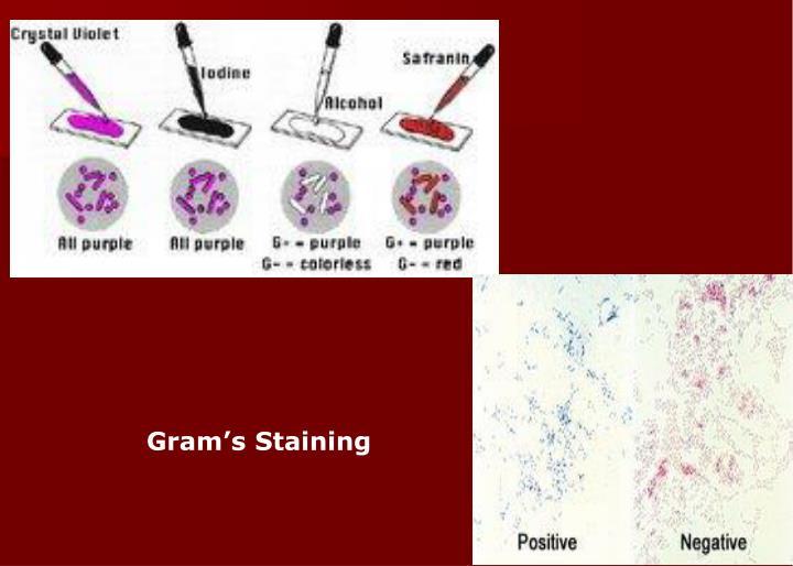 Gram's Staining