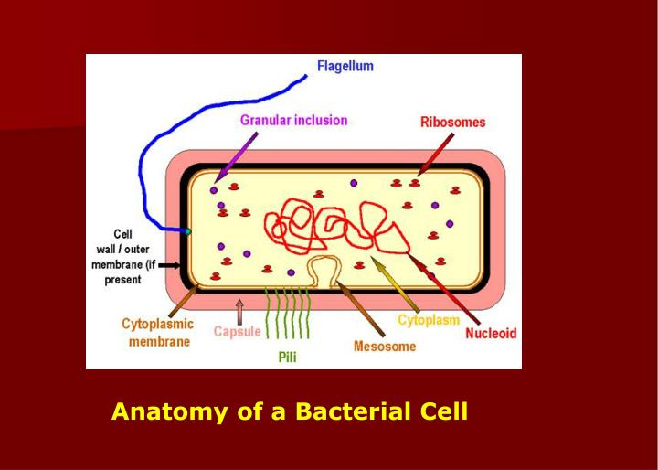 Anatomy of a Bacterial Cell
