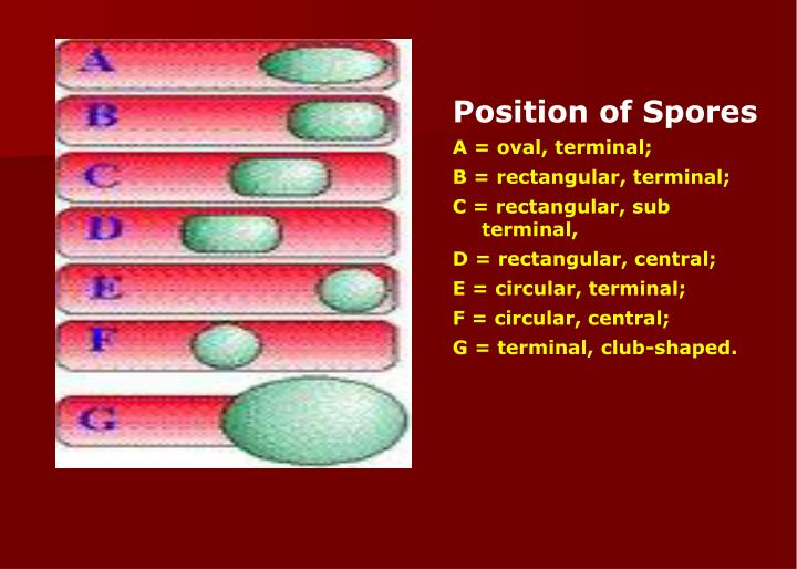Position of Spores