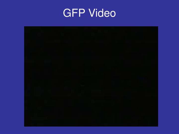 GFP Video