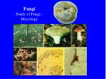 fungi study of fungi mycology