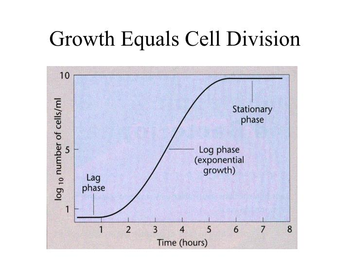 Growth Equals Cell Division