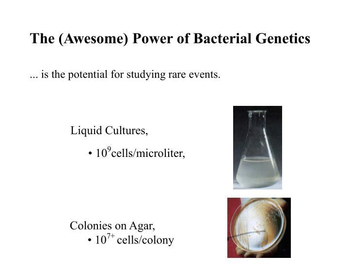 Liquid Cultures,