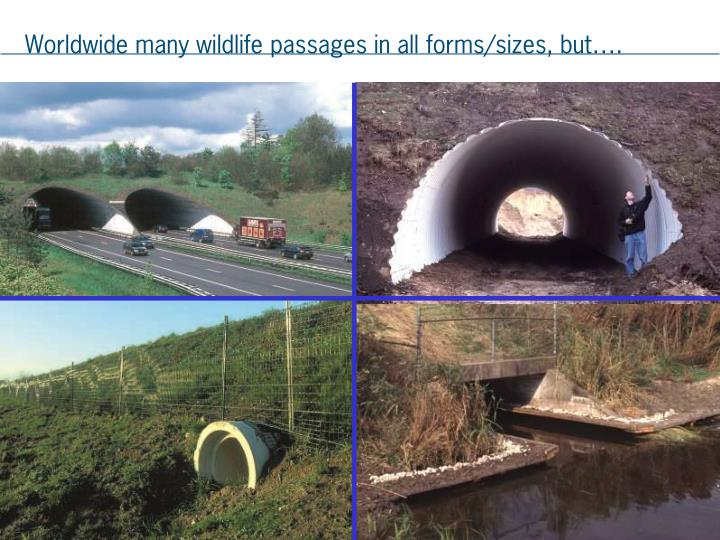 Worldwide many wildlife passages in all forms/sizes, but….