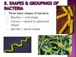 ii shapes groupings of bacteria